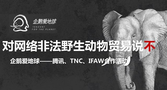 Tencent-for-the-planet-elephant-campaign-submitted