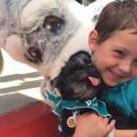 boy-w-puppy-Maddies-Fund-Adoption-Day-submitted-750px