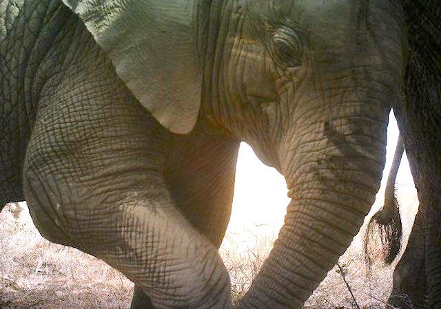 elephant-snapshot-serengeti-FB-page