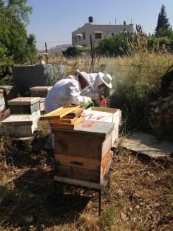 palestinian-bee-guy-tom-blanx