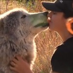 wolf-therapy-featured-WolfConnectionVideo