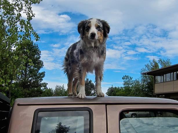 Dog atop car-CC-ex_magician