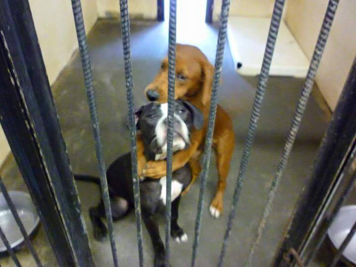 Hugging Dogs Adopted Angels Among Us Pet Rescue Facebook