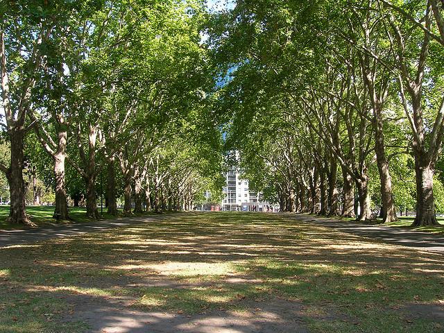 Melbourne Australia trees CC DoNotLick