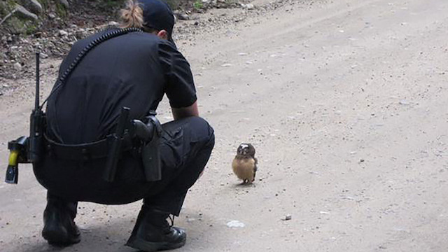 Owl Boulder County Sheriffs Office Facebook