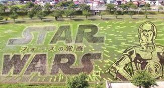 Star Wars rice paddy screenshot YouTube
