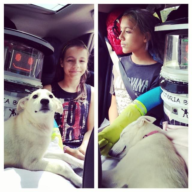 hitchbot dog kid Facebook