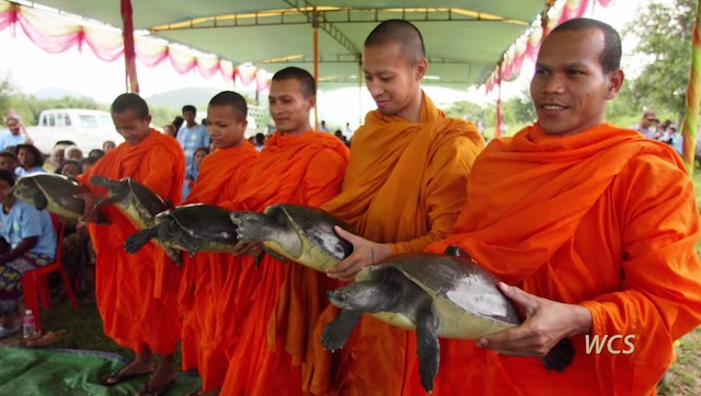 monks turtles screenshot Wildlife Conservation Society
