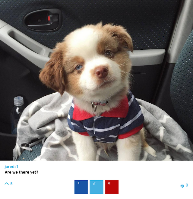 preppy puppy screenshot barkfeed