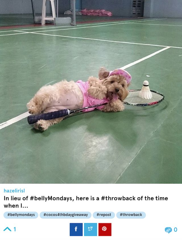 tennis dog screenshot BarkFeed