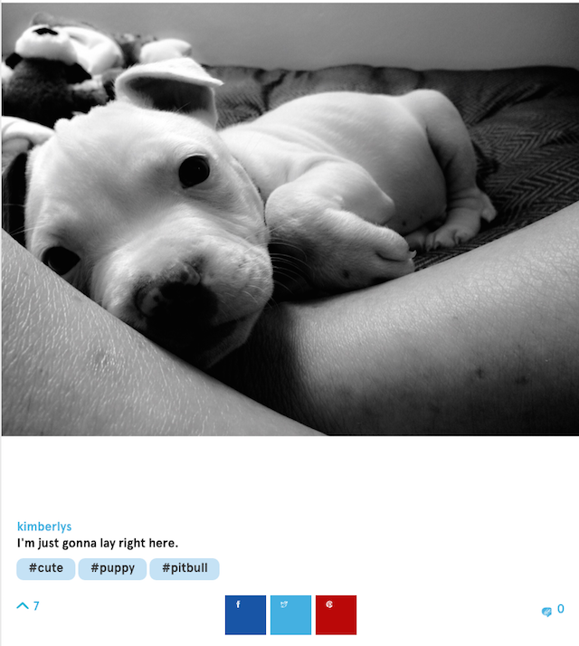 tiny puppy screenshot barkfeed