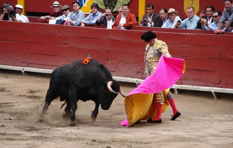 Bullfight CC Susana Aysanoa