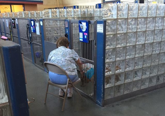 Dog Reader 1 Reddit user puglife123 aka Kathleen Costello