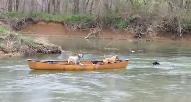 Dog canoe rescue training screenshot YouTube Deborah McAlister Faddis
