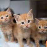 Friday Night Lights Kitten Nursery Best Friends Animal Society