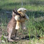 Kangaroo Hug teddy Gillian Abbott released