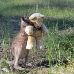 Kangaroo Hug  teddy Gillian Abbott released