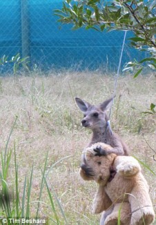 KangarooHug 2 Timothy Beshara released