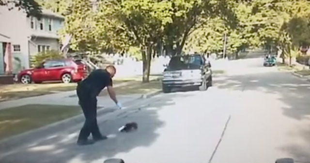 cop skunk youtube