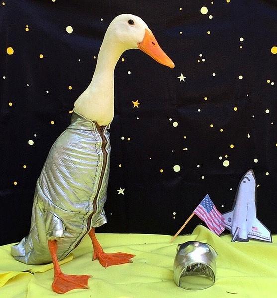 guues-the-duck-astronaut-instagram