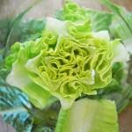 lettuce CC Ano lobb