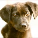rescue dog Rosie CC pocketwiley