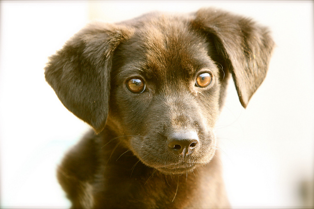 Rescue Shelters For Dogs In Phoenix