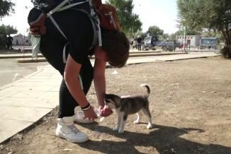 Aslan Al Hakim with dog drinking UNHCR video screenshot