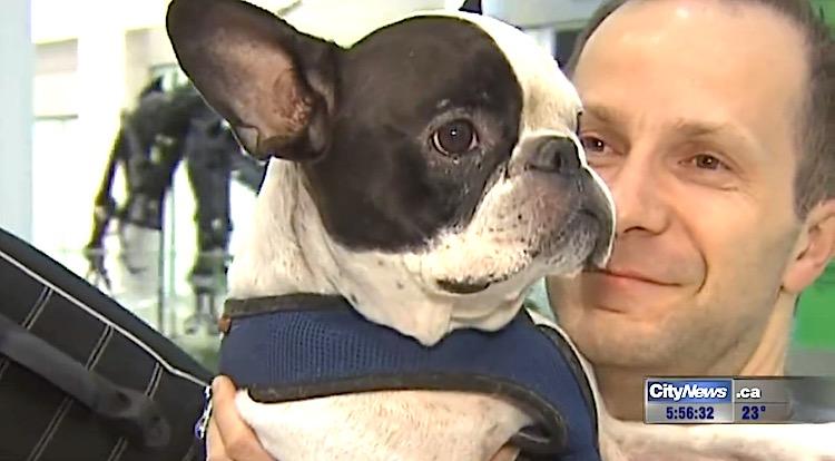 Dog diverts flight screenshot City News