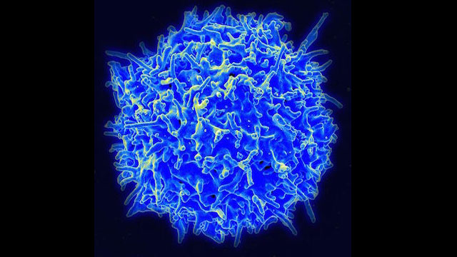 Healthy_Human_T_Cell-CC-NIAID