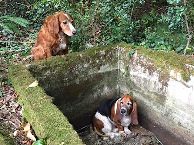 Phoebe and Tilly Facebook Vashon Island Pet Protectors