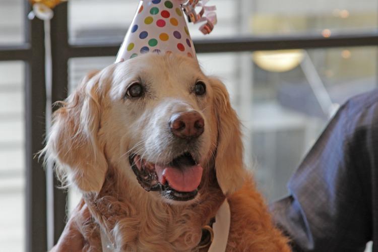 bretagne birthday released barkpost
