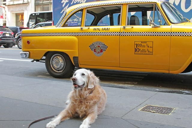 bretagne taxi barkpost released