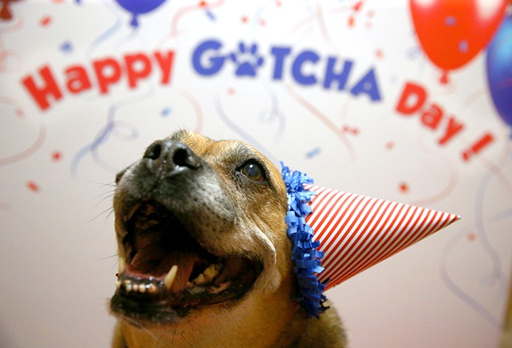 Celebrates Adopted Pets With Unknown Birthdays
