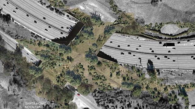 nature-bridge-MRCA-press-release
