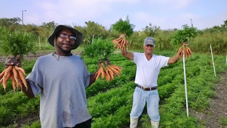verne gardens residents carrots submitted