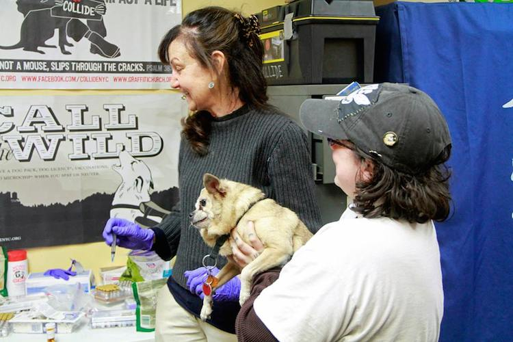 collide pet volunteers submitted