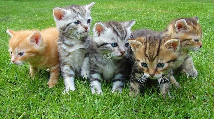 feral kittens CC Jan-Mallander