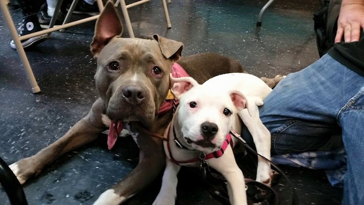 homeless pets collide nyc submitted