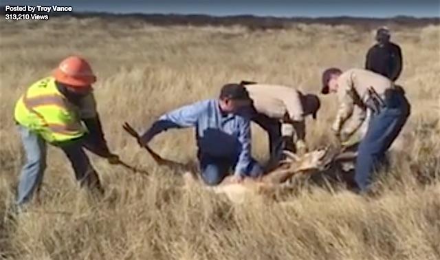 Deer Rescue Facebook Troy Vance
