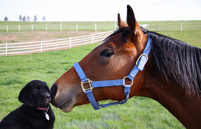 Dog and Pony cc Andrew Magill