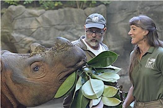 Harapan release Cincinnati Zoo
