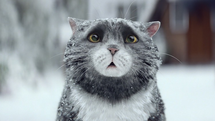 Mog-the cat-Sainsburys ad
