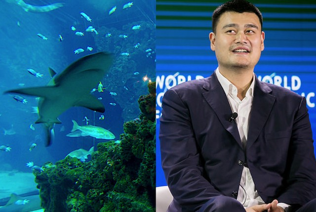 Yao Ming and Shark cc voyagedeslivres and cc World Economic Forum
