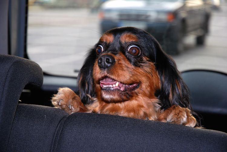 silly dog CC allen watkin