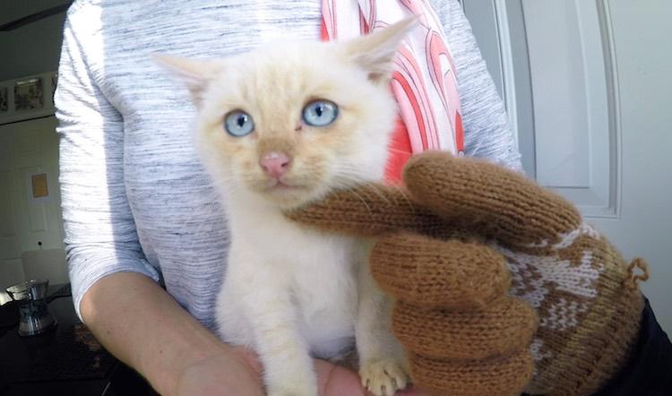 Frozen kitten lives screenshot Branden Bingham