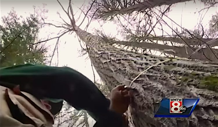 Tallest Chestnut Tree in North America 2015 Screen Shot WMTW