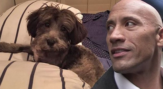 The Rock and Dog GoFundMe Save Spot