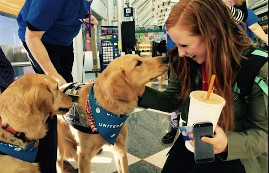 UnitedPaws therapy dogs Twitter United