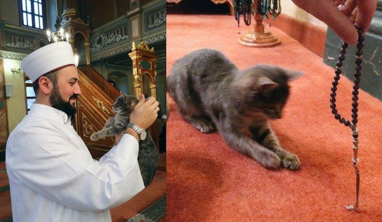 Cats in Mosque Twitter Serdar Çelebi
